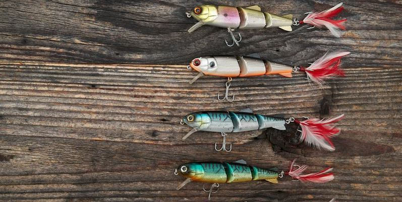 How to choose the right bait when fishing